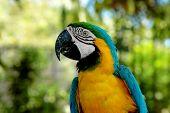 nature - parrot portrait poster