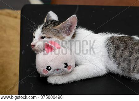 Closeup Cute Kitten Lie Down With Rabbit Doll