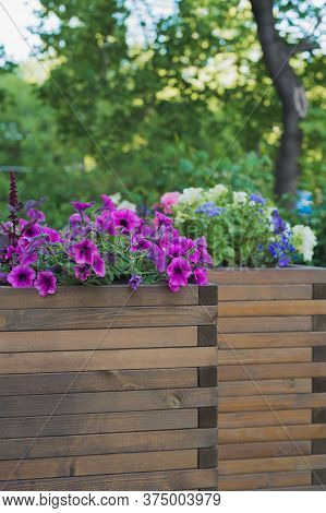 Petunia, Amaranth, Ageratum And Lobelia Flowers In Wooden Container Flower Pot Outside In Street Caf