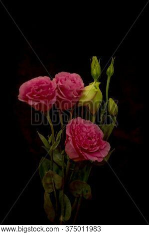 Close Up Of A Bouquet Of Pink Lisianthus Summer Flower Variety, Studio Shot, Pink Flowers