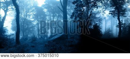 Horizontal banner with night nature scene. Mysterious landscape with trees and bushes in foggy forest. Photo toned in blue color