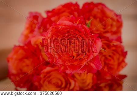 Close Up Of A Bouquet Of Free Spirit Roses Variety, Studio Shot, Orange Flowers