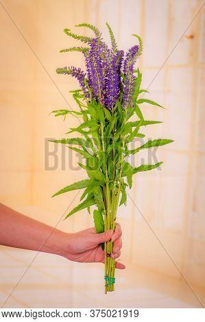 Women Hand Holding A Bouquet Of Blue Veronica Summer Flowers Variety, Studio Shot, Purple Flowers