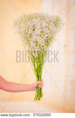 Women Hand Holding A Bouquet Of Xlence Variety, Studio Shot, White Flowers