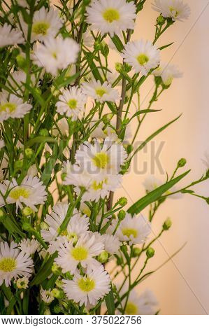 Close Up Of A Bouquet Of Astee White Summer Flowers Variety, Studio Shot, White Flowers Variety.