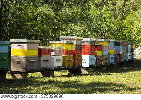 Colorful Wooden Beehives And Bees In Apiary Near White Acacia Forest. Apiculture