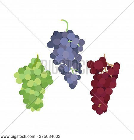 Vector Illustration Of A Bunch Of Grapes Of Different Varieties On A White Background In A Flat Styl