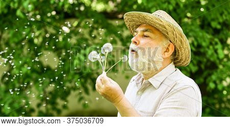 Elderly Man In Straw Summer Hat. Happy And Carefree Retirement. Lonely Grandpa Blowing Dandelion See