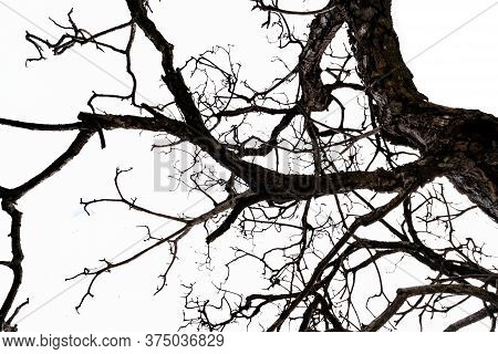 Bottom View Of Dead Tree And Disorganized Branches Isolated On White Background. Death, Hopeless, De