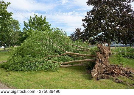 Fallen Tree After A Heavy Storm In The City Centre Of Magdeburg In Germany
