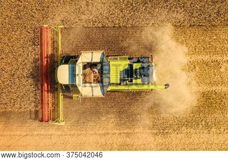 Harvester Combine Harvest Wheat In Yellow Or Golden Ripe Field, Aerial View Top View.