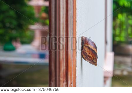 Snail, Land Snail, Terrestrial Pulmonate Gastropod Molluscs Climb Up On Cement House Wall To Window