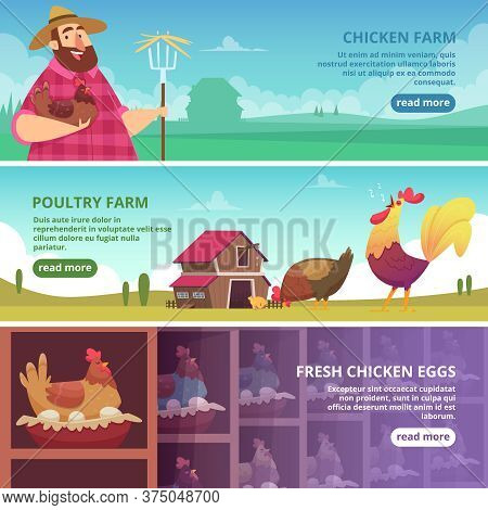 Chicken Farm Banners. Farmer Breeding Eco Domestic Birds Fresh Eggs Roosters And Hens Vector Design