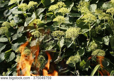 Bonfire. Orange Flame Of Fire On A Background Of Grass. Arson Or Natural Disaster. Bonfire Is Close.