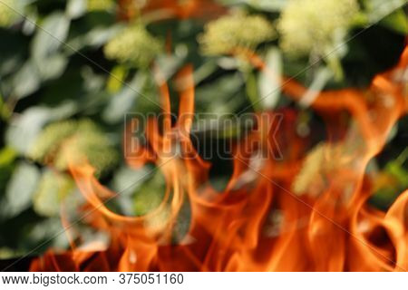 Texture. Bonfire. Orange Flame Of A Fire. Bonfire Close. Fire In Nature. Bonfire Background. Blurred