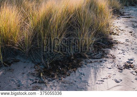 Close-up Of Grass Plant Outdoor Growing On The Sand At The Beach Shot At Shallow Depth Of Field