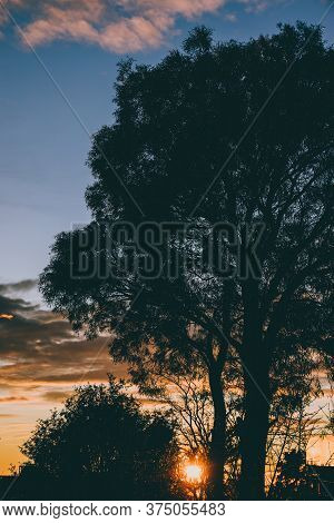Sunrise Sky With Beautiful Sunflare Shining Through Trees And Vegetation