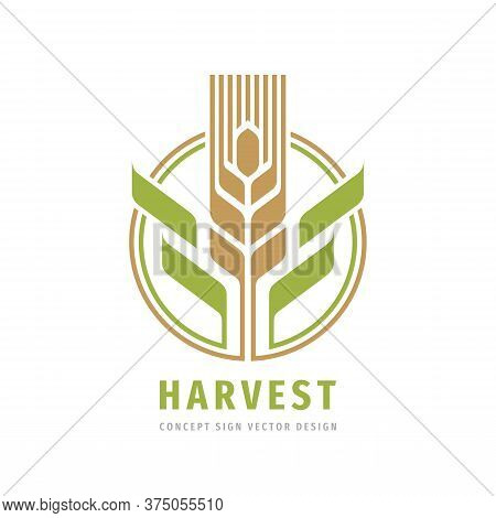 Harvest Grain Crop Cereal Logo Template Creative Illustration. Ear Of Wheat Organic Logo Sign. Ecolo