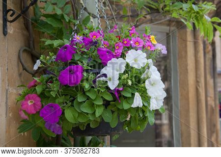 A Hanging Basket With Large White Petunia Flowers And Purple Rock Cress Flowers