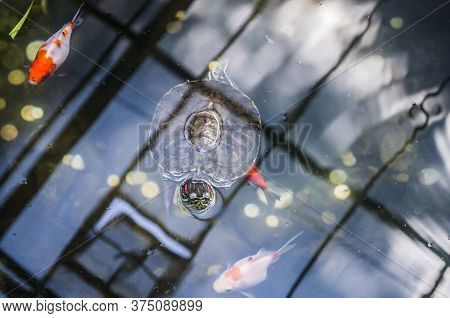 Decorative Turtle And Fish In An Artificial Pond. Animal Photo.