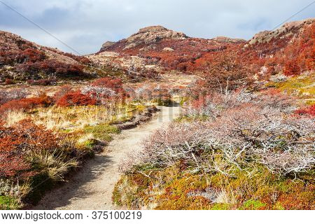 Indian Summer Forest Near The Fitz Roy In Autumn. Fitz Roy Is A Mountain Near El Chalten In Patagoni