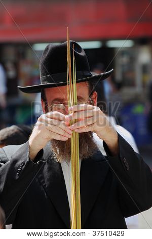 BNEI-BRAK, ISRAEL - SEPTEMBER 22: The religious Jews in a hat are choosing ritual plants at the market on the eve of Sukkot September 22, 2010 in Bnei Brak, Israel. This was Sukkoth market