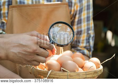 Young Smart Farmer Wear Plaid Long Sleeve Shirt Brown Apron Are Holding Fresh Chicken Eggs Into Bask