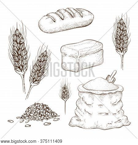 Hand Drawn Breads, Flour Bag And Wheatears Set Isolated On White. Sketch Illustration Of Square Whol