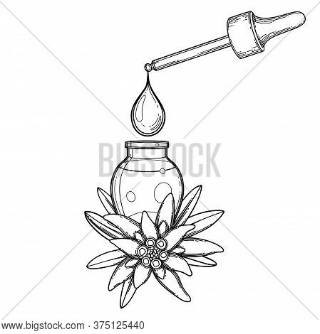 Graphic Oil Drop Dripping From The Dropper Inside The Glass Bottle Decorated With Edelweiss Leaves A