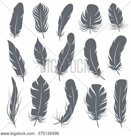 Feather Silhouettes. Different Feathering Birds, Graphic Simple Shapes Pen Decorative Elements, Blac