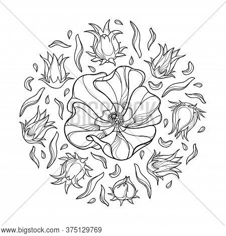 Vector Round Bunch Of Outline Roselle Or Hibiscus Sabdariffa Or Carcade Plant With Fruit And Flower