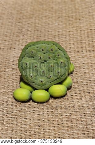 Nelumbo Nucifera Or Indian Lotus Head With Seed On Burlap Fabric In Vertical Orientation