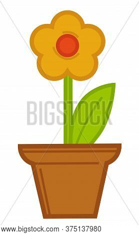 Flower Growing In Pot, Flourishing Of Potted Flower