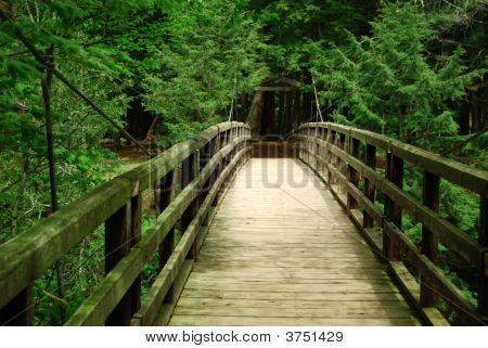 Wooden Suspension Bridge