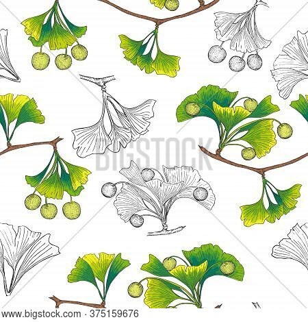 Pattern With Ginkgo Both Colored And Outlined