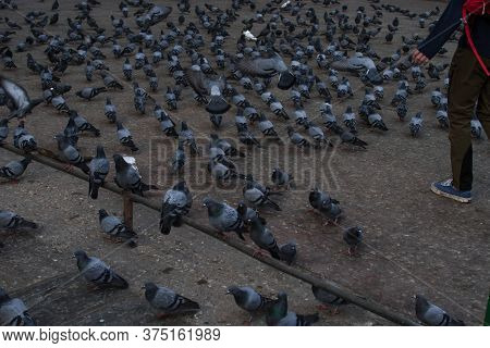 A Young Tourist Scaring Many Pigeons On A Square In Kathmandu, Nepal