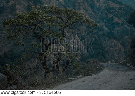 Single Beautiful Tree By The Side Of A Dirt Road In The Moody Mountains Of Annapurna Circuit