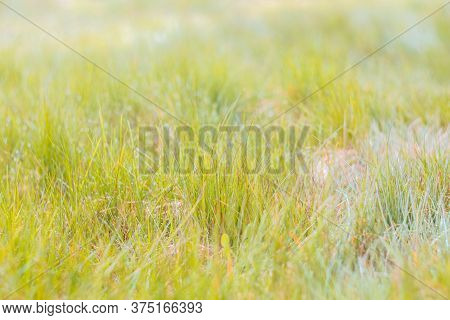 Tender Grass In The Sun Light. Green Grass And Drops After Rain. Bright Juicy Lawn. Natural Herbal B