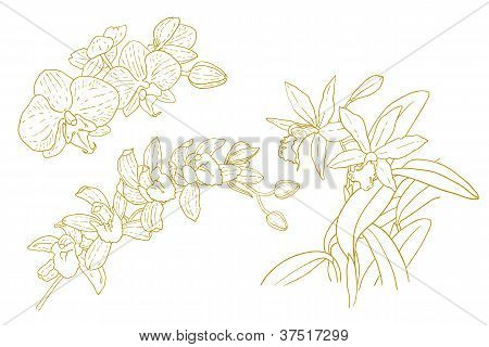 Set of one-colored outlined orchids