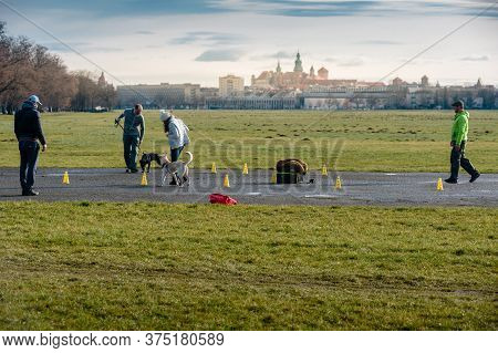 Krakow, Poland- February 01, 2020: Dogs With Owners At Obedience Outdoor Training Course In Poland