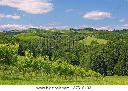 Vineyard in Styria near Leutschach called styrian Tuscany,Austria poster