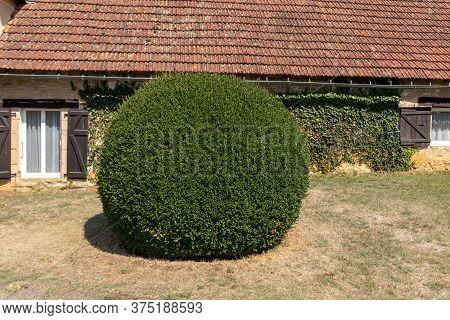 Manicured Garden Shrubs. Green Garden Balls In France