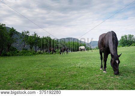 Beautiful Chestnut Horses On A Farm In Summer