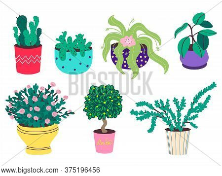 A Set Of Home Plants In Pots. Cacti, Ficus, Rose, Bonsai. Decorative Flowers And Greenery In Flower