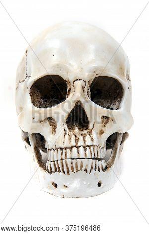 Human Skull Bone Isolated On The White Background