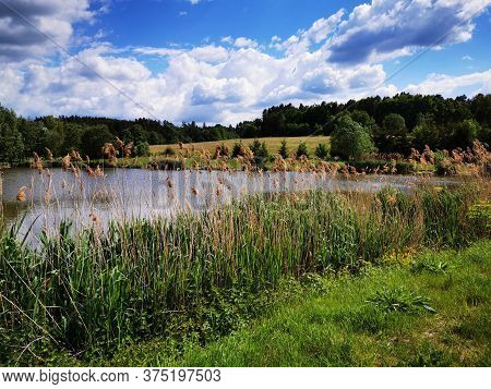 Small Lake In The Forest As Very Nice Natural Background