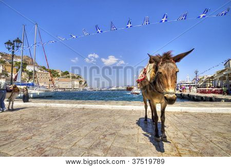 A donkey at the Greek island Hydra. Donkeys are the only means of transport on the island no cars are allowed. poster