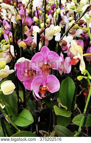 Very Nice Orchid Flower Texture In The Garden