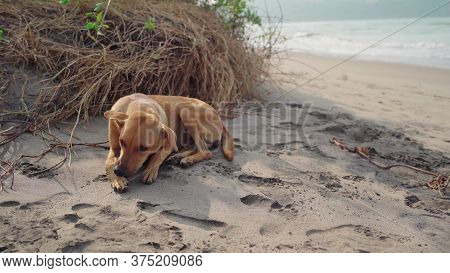 Mutt Puppy Laying On The Sand At The Dog Beach. Abandoned Lonely Dog