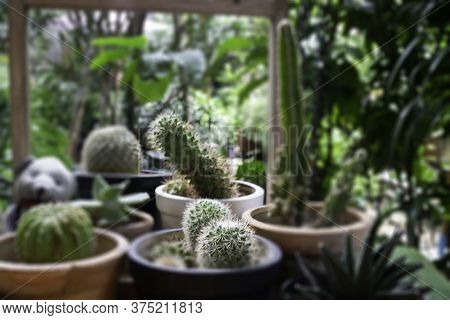 Variety Cactuses In A Row, Stock Photo